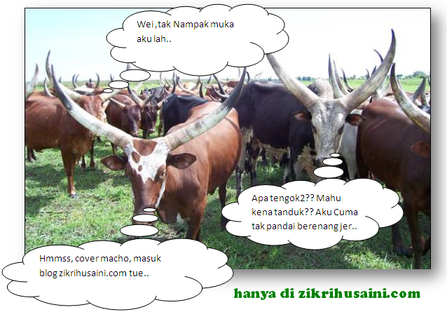 cattle cow, cow picture, cattle horn large, lembu tanduk panjang, lembu pelik,